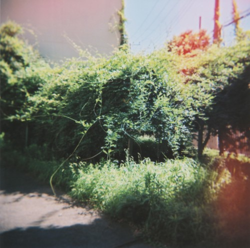 MUDAI (FRONT)
